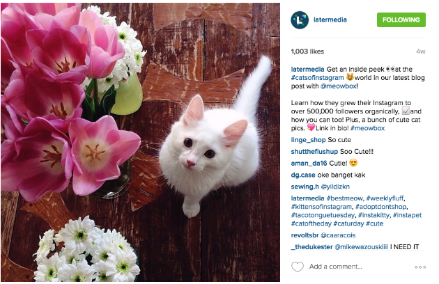 How to Drive Traffic from Instagram using Bitly - Bitly | Blog