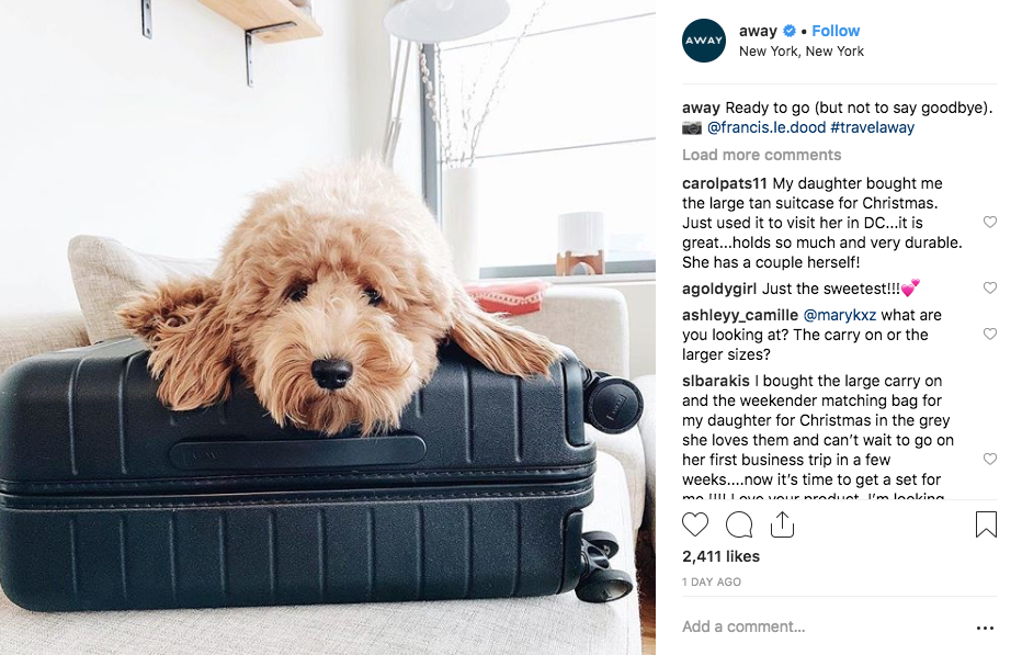 A photo of a dog on an Away suitcase